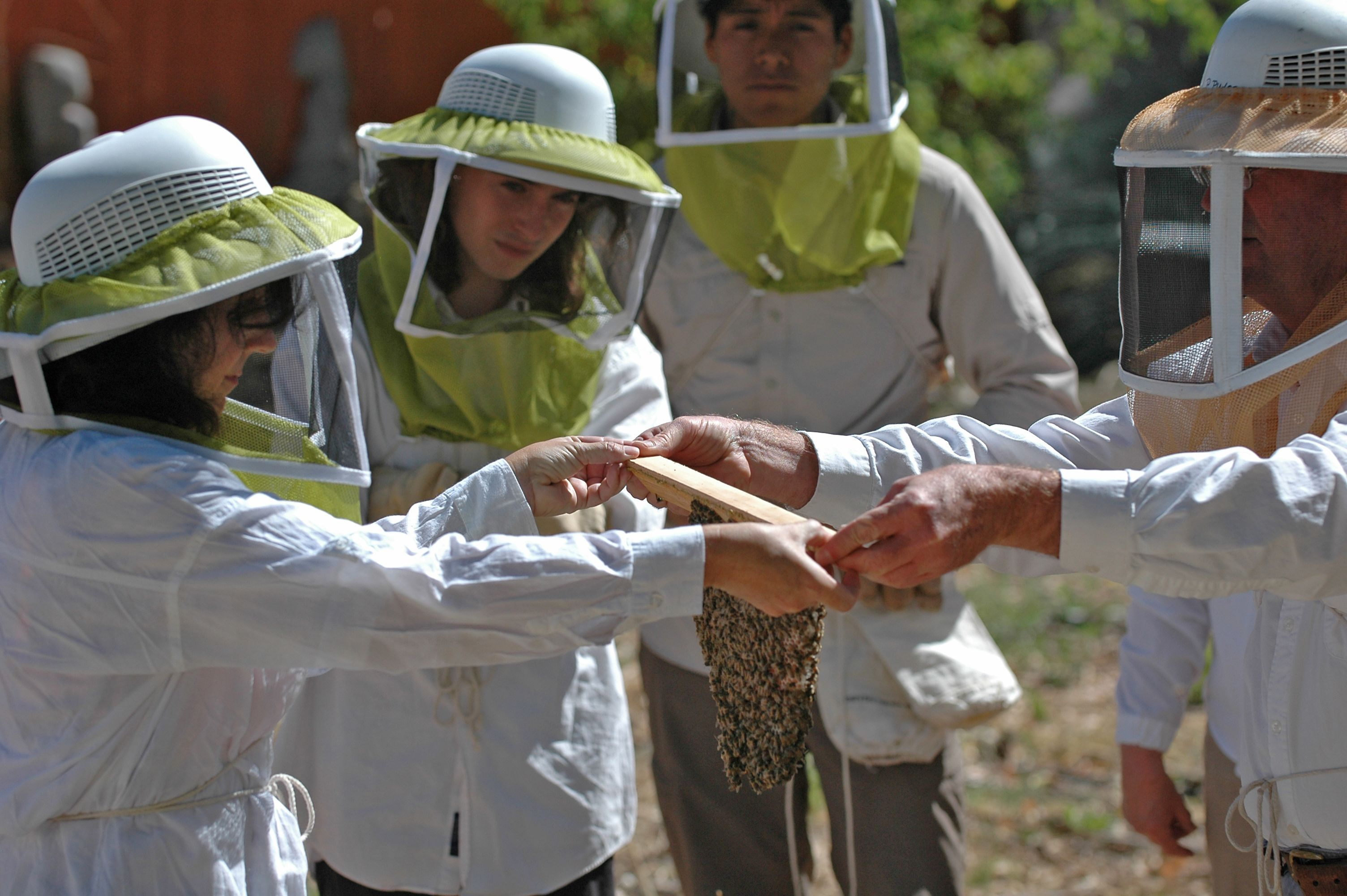 Summer 2014 Beekeeping Workshop in Prescott, Arizona