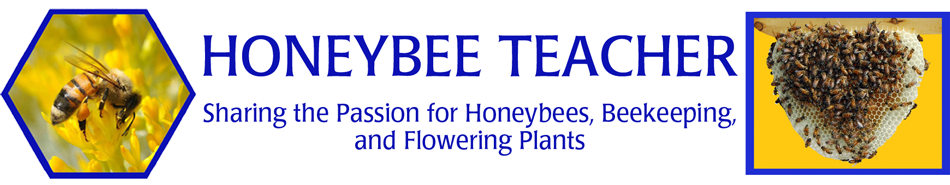 Honeybee Teacher